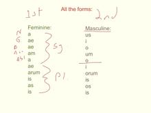 Latin noun adjective agreement platinumwayz