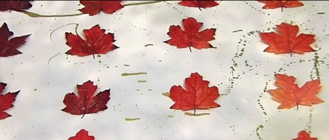 Preserved Autumn Leaves Art