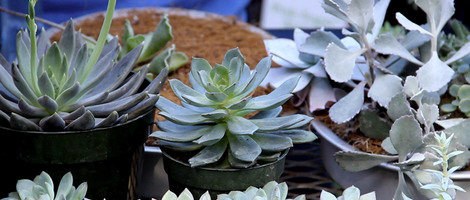 Sunset's Guide to Container Gardens