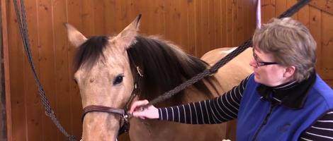 Basic Horsemanship Skills & Safety