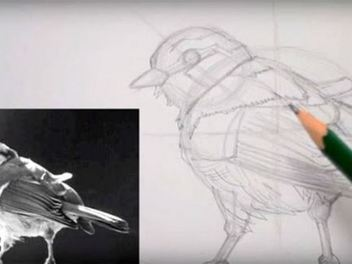 I have a new lesson, How to Draw a Sparrow with Guidelines!