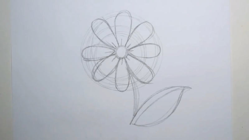 Daisy Flower Line Drawing : How to draw a daisy